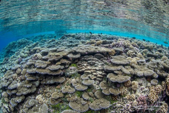 The healthy coral reef in Fakarava South Pass (Tetamanu Pass), French Polynesia.
