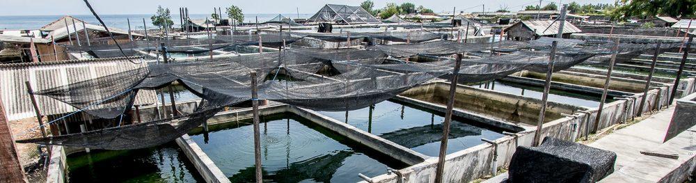 Bali Aquarich