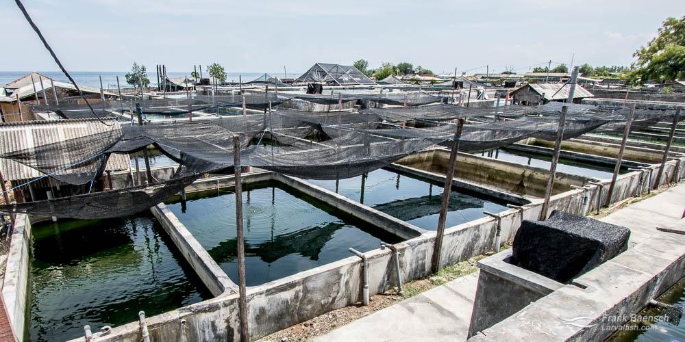 Aquaculture complex at Bali Aquarich, Indonesia.