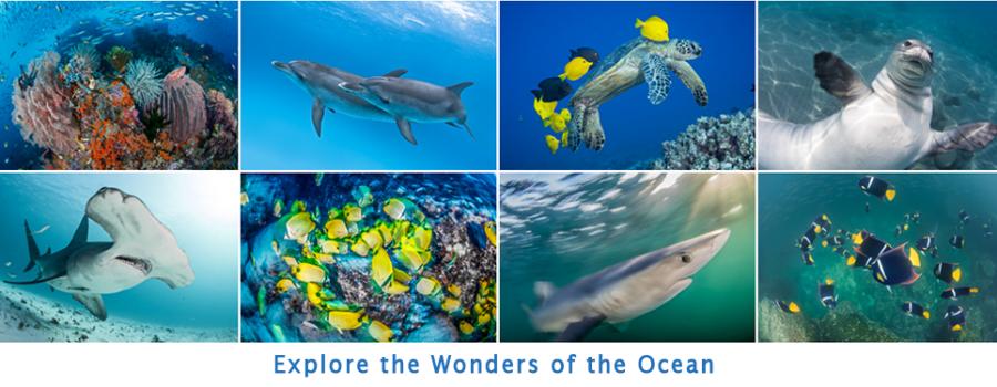 Explore the Wonders of the Ocean