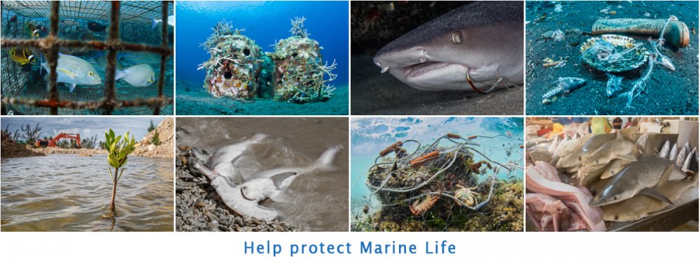 Help protect Marine Life
