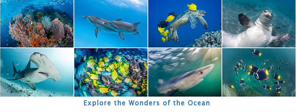 Explore the Wonders of the Ocean