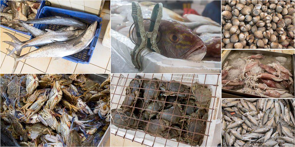 Alternative seafoods. T: Mackerel, jobfish, ark clams, squid. B: Blue swimmer crab, mud crabs, short mackerel.