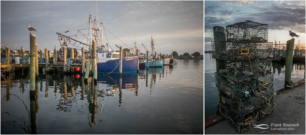 Left: Fishing fleet in Point Judith Harbor of Refuge. Right: Lobster traps.