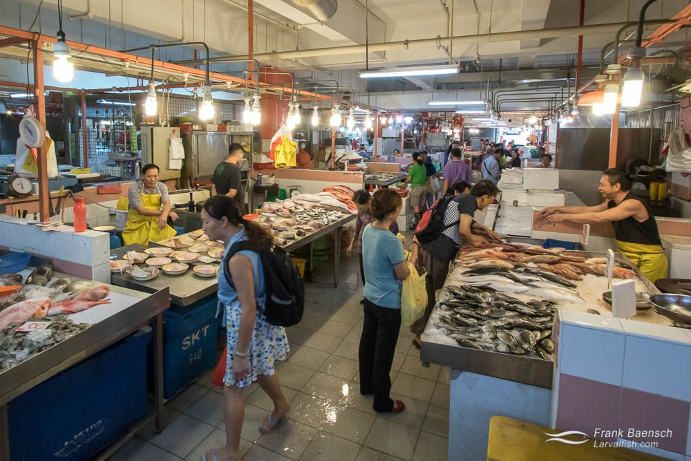 Singapore's Chinatown Seafood Market
