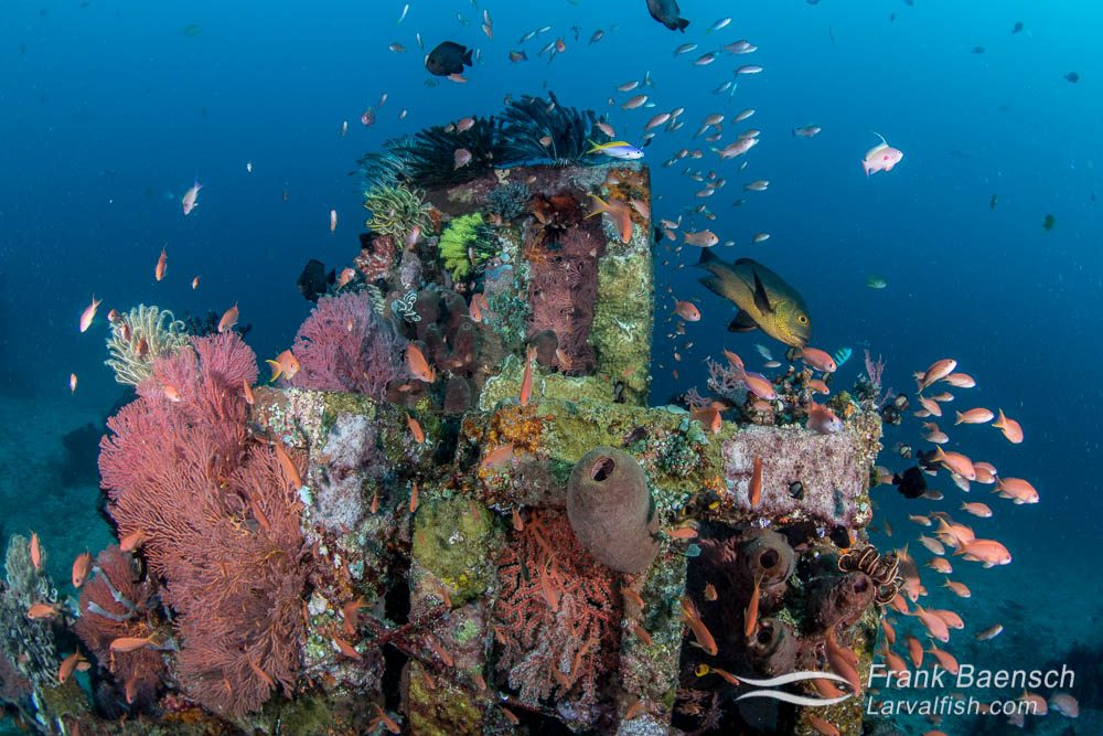 A thriving artificial reef made from tied together concrete blocks off Bali, Indonesia.