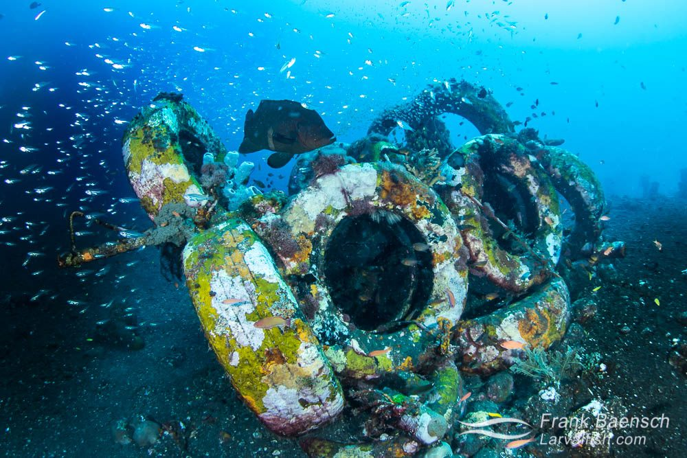 In Florida artificial reefs made from old tires often fail to develop life and even damage nearby reefs during storms. But in the highly productive waters off Bali, even old tires develop into thriving ecosystems. Indonesia.