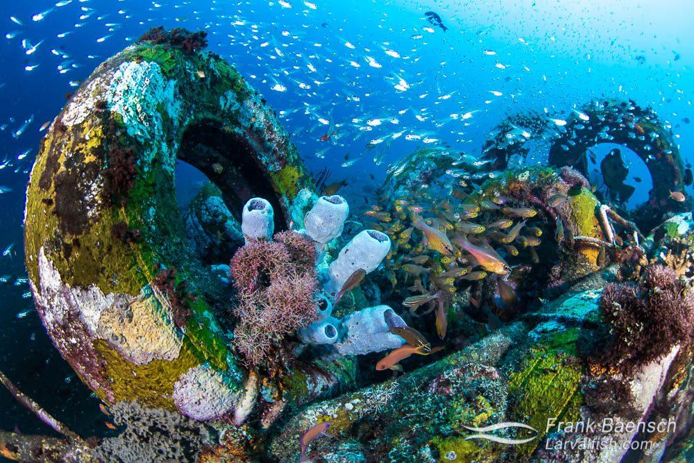 Old tires create a thriving artificial reef off Bali, Indonesia.