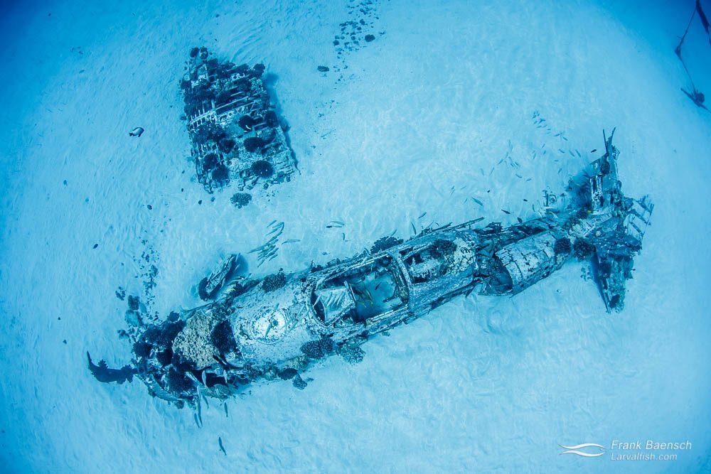 Corsair wreck off Oahu. Hawaii.