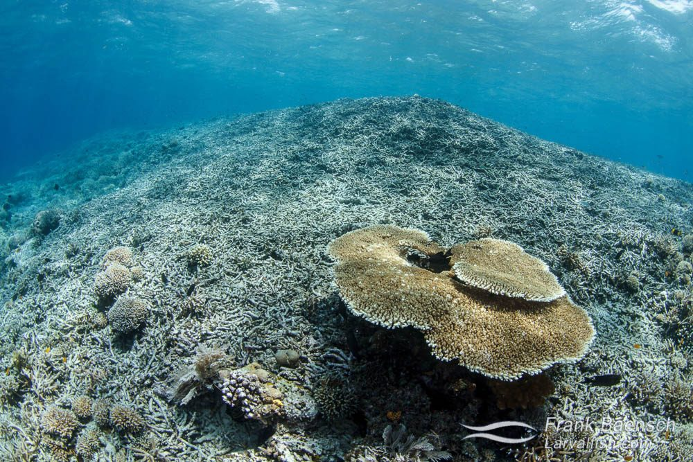 Damaged coral reef