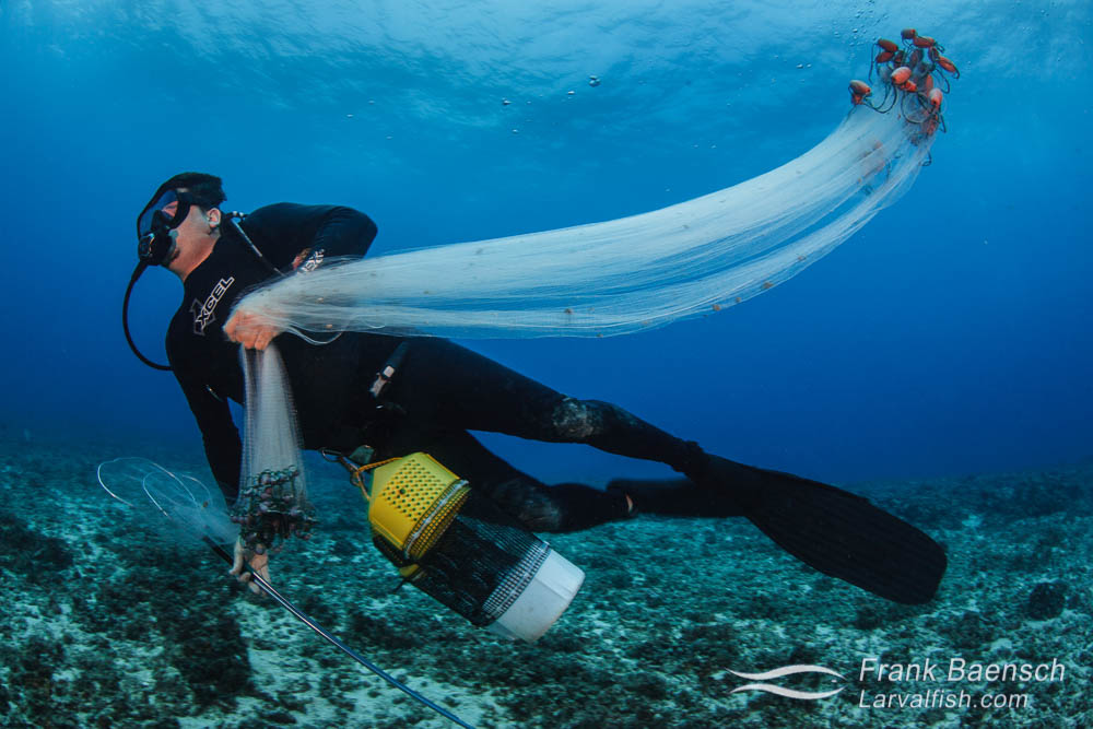 Fish collector in Hawaii with barrier catch net, hand nets and collecting bucket.