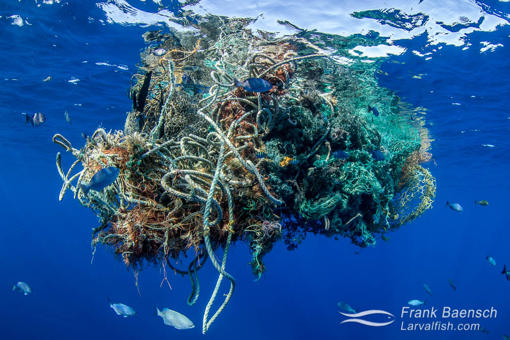 Fishnet flotsum found in the the open ocean off Oahu, Hawaii.