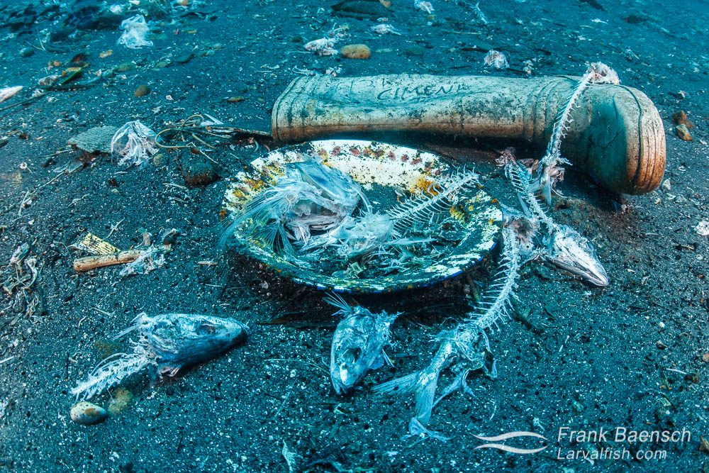 Fish bones, plate and boot trash scene in Ambon harbor, Indonesia.