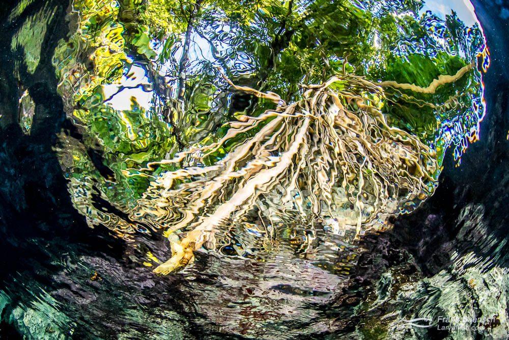 A tree as seen through snell's window. Solomon Islands.