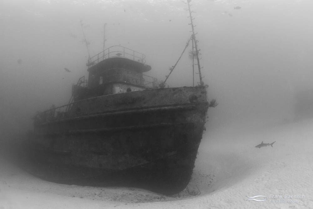 Wreck in the Bahamas.