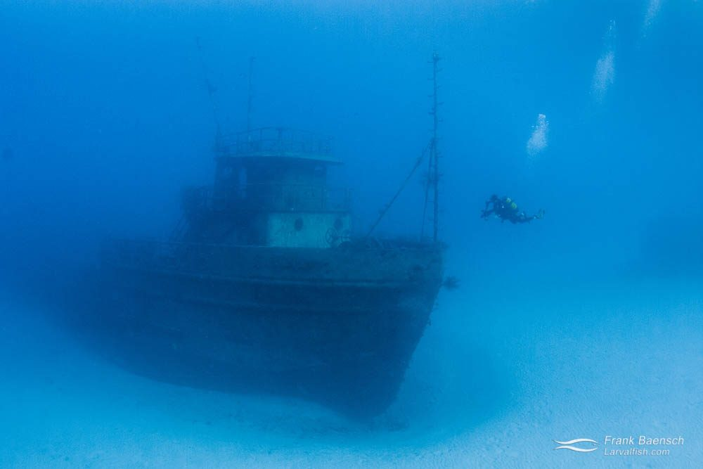 Diver next to wreck in the Bahamas.