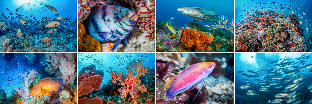 Marine Life Photo Galleries