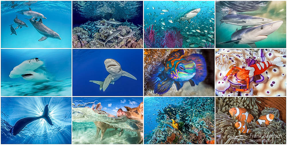 Collage of favorite underwater images.